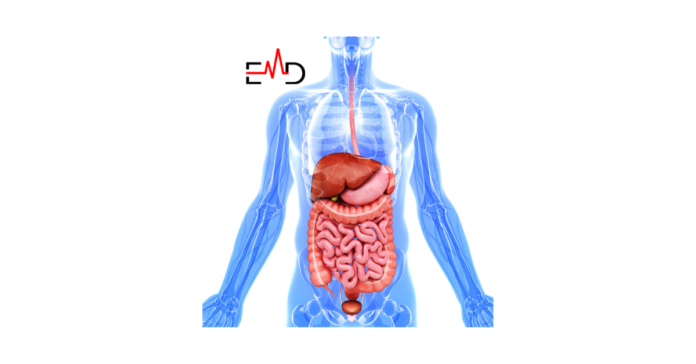 What is the Main Function of the Digestive System?
